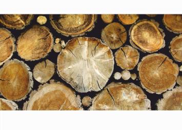 Erdőművelés, Fakitermelés